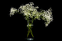 OnBlack_Baby's Breath_03